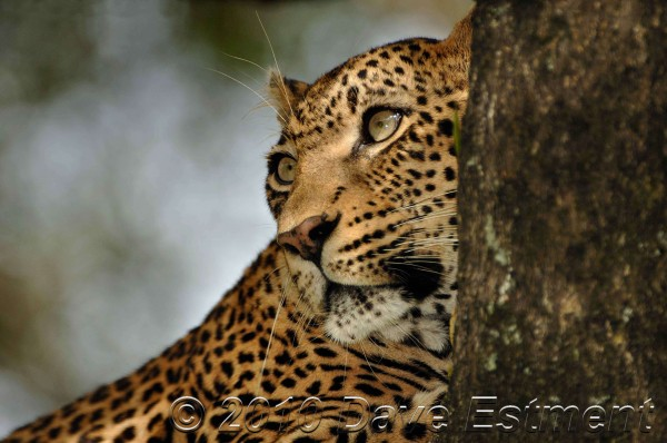 Post image for Celebrating Southern African Getaways