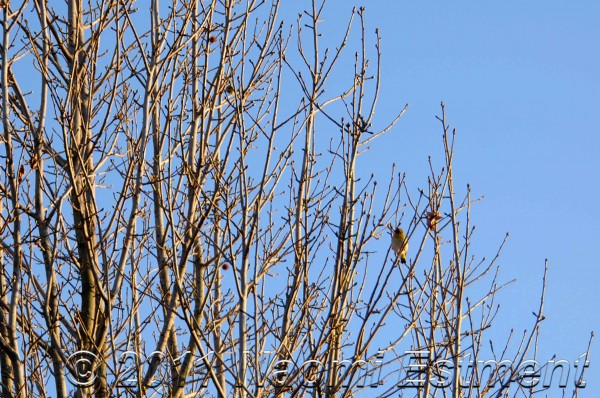 bare winter branches against blue sky