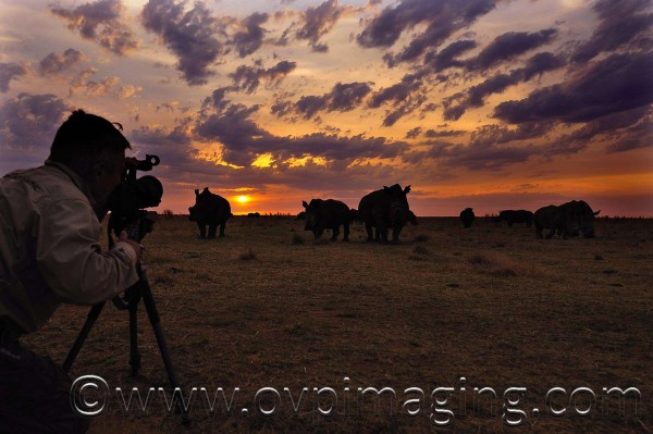 Dave Estment filming rhino at sunset